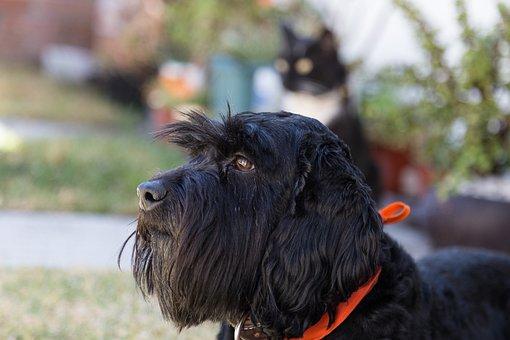 Veterinary, Vetshop, Pets, Dog, Black Dog, Animals