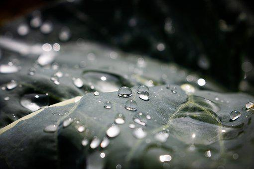 Leaf, Green, Nature, Drop Of Water, Drip, Freedom, Wet