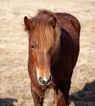 Horse, Brown, Frontal, Animal, Equestrian, Farm