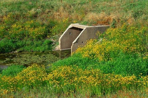 Sewage Pipe, Wild Flowers, Wastewater, Stream, Brook