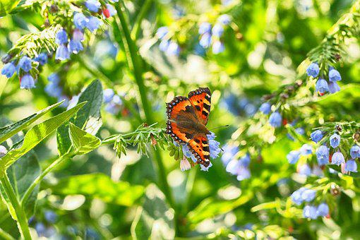 Butterfly, Nature, Flower