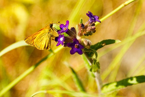 Butterfly, Nature, Insect, Public Record