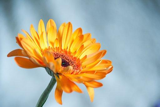 Flower, Orange, Summer, Closeup, Flowers, Macro
