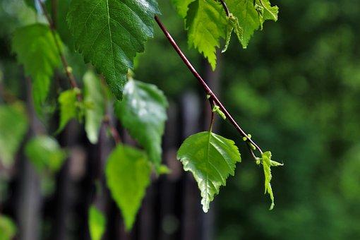 Foliage, Green, Sprig, Summer, Nature, Branch