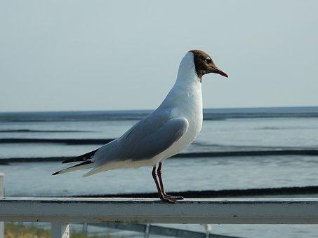 Arctic Tern, Tern, Bird, Water Bird, Hatching