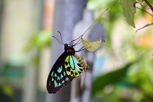 Butterfly, Green, Nature, Insect, Spring, Summer, Leaf