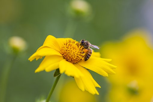 Insects, Cuteness, Bee, Nature, Flowers, Wildflower