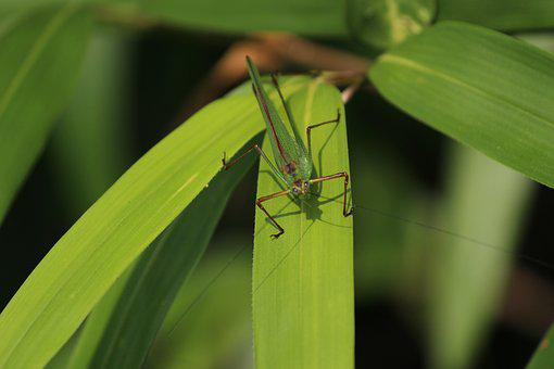 The Chi, Grasshopper, Pool, Insects, Plants, Forest