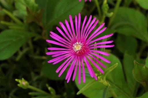 Flower, Purple Flower, Violet, Rosa, Pink Flower