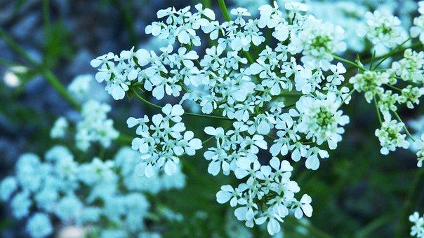Flower, Nature, Tree, Foliage, Summer, Spring, Purple