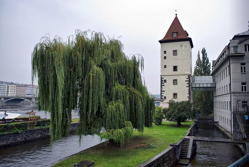Prague, Tower, Willow, River, Bridge, City, Building