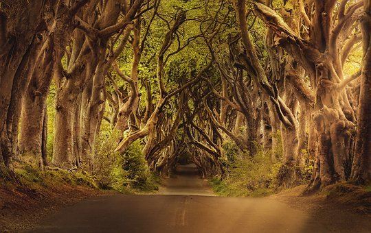 Trees, Road, Avenue, The Dark Hedges, Northern Ireland
