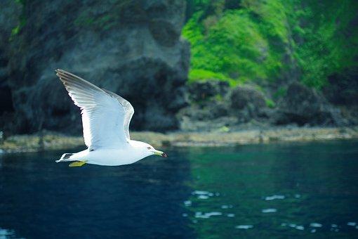 Sea Gull, Sea, Natural, Wild Animal, Beach, Wild Birds