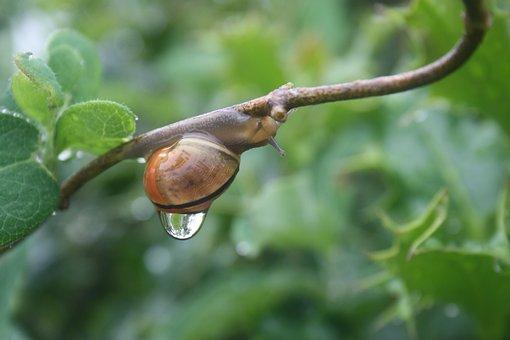 Snail, Rain, Sweating, Speed