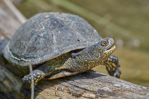 Turtle, Water, Water Turtle, On The Water, Log