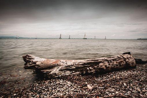 Lake Constance, Tree, Water, Sailing Boat