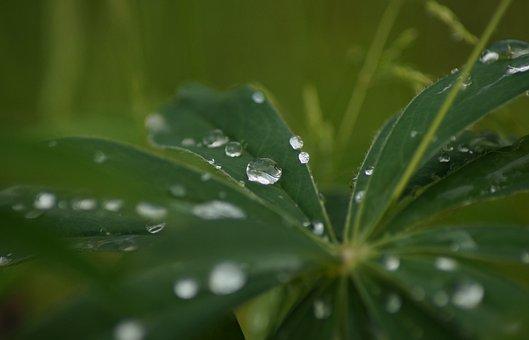 Plant, Green, Dew, Wet, Morning, Rain, Close, Garden