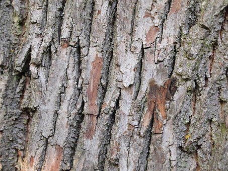 Tree, Bark, Pattern, Background, Wood, Natural, Texture