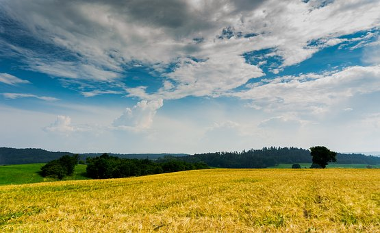 Wheat Field, Sky, Wheat, Grain, Agriculture, Nature