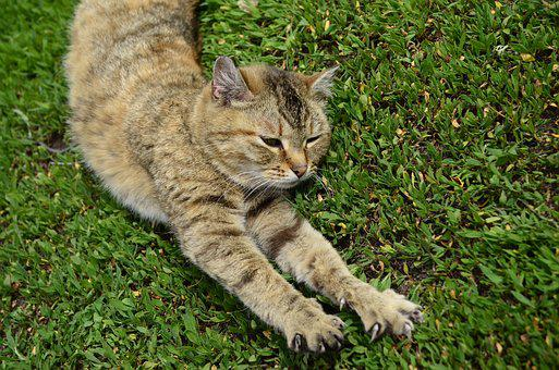 Cat, Foot, Cat Paws, Animal, Housecat, Yellow-eyed Cat