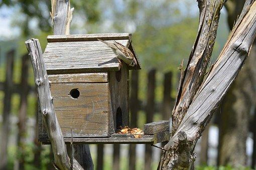 Sparrow, Bird, Birds House, Birds Cage, Natural, Animal