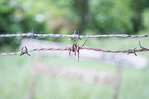 Wire, Barbed, Fence, Security, Danger, Sharp, Barrier