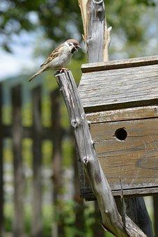Sparrow, Bird, Birds House, Birds Cage, Country