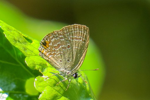 Butterfly, Beauty, Insect, Macro, Natural, Plant