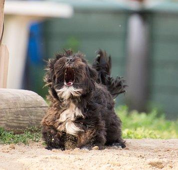 Dog, Small, Hybrid, Animal, Barking, Yelp, Sand, Nature