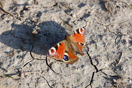 Butterfly, Nature, Insect, Wings, Field, Drought, Earth