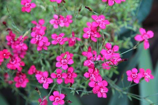Eyelet, Mini Eyelets, Flowering, Eyelets Pink