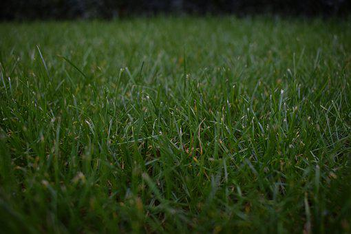 Grass, Closeup, Background, Fresh, Lawn, Floor, Ground
