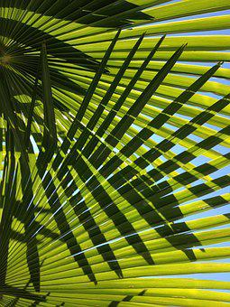 Palm, Leaves, Green, Plant, Flora, Leaf, Nature, Shadow