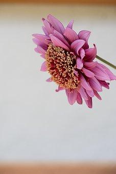 Flower, Plant, Pink, Pink Flower, Blossom, Bloom