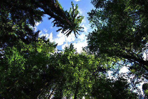 Forest, Trees, Branches, Nature, Tree, Plants, Trunk