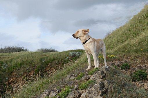 France, Coast, Dog, Brittany, Holiday Dog, Holidays