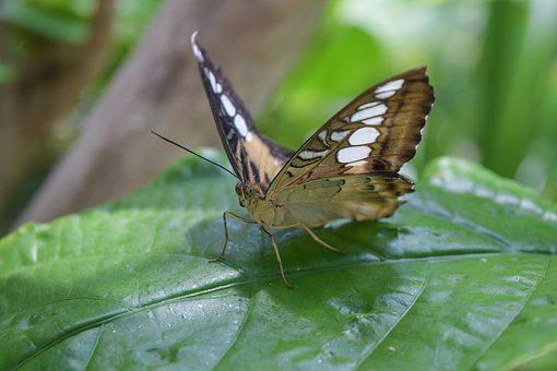 Butterfly, Nature, Insect, Green, Bug, Outdoors