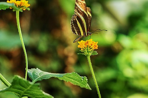 Butterfly, Flower, Nature