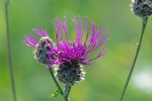 Plant, Flower, Pink, Pink Flower, Blossom, Bloom