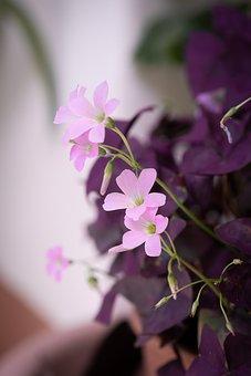 Flower, Plant, Pink, Pink Flower, Pink Flowers, Petals