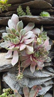 Nature, Plant, Flower, Garden, Leaf, Color, Close