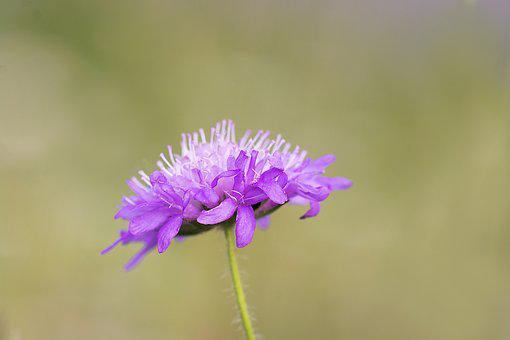 Flower, Pointed Flower, Plant, Purple, Purple Flower