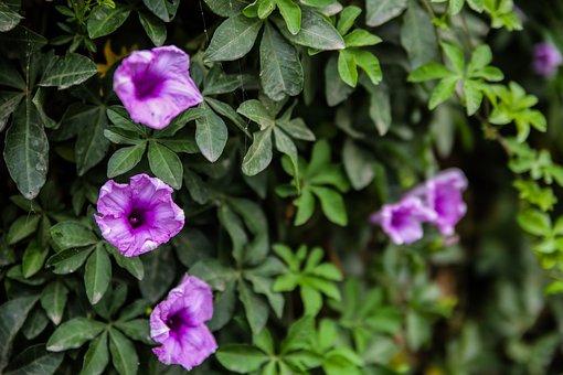 Railway-creeper, Flower, Railway, Creeper, Wall, Flora