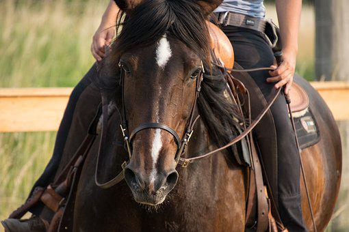 Horse, Animal, Brown, Mare, Western, Ride, Nature