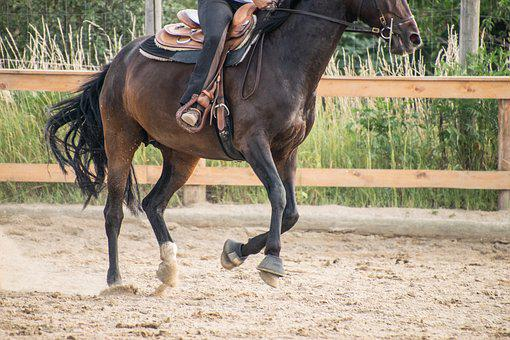 Horse, Gallop, Ride, Training, Brown, Animal, Human