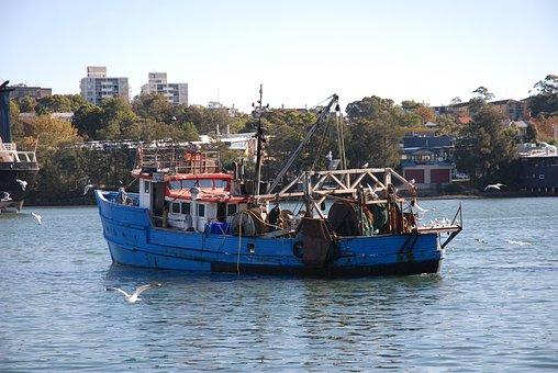 Ship, Port, The Fisherman, Fish, Sea Fishing, Seagull