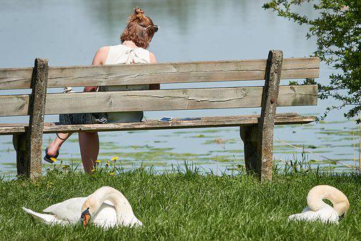 Swan, Bank, Woman, Lake, Sit, Swans, White Swan, Water