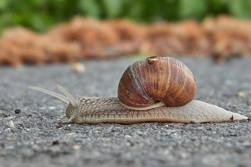 Snail, Shell, Mollusk, Slowly, Crawl, Nature, Animal