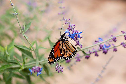 Butterfly, Garden, Nature, Summer, Colorful, Moth