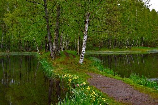 Munka Ljungby, ängelholm, Skåne, Sweden, Nature